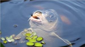 淡水龙虾养殖技术