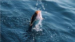 11种常见鱼病